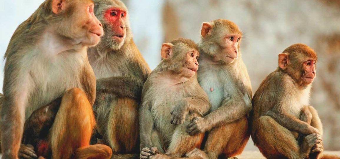 Apina apinat hallitus ministeri